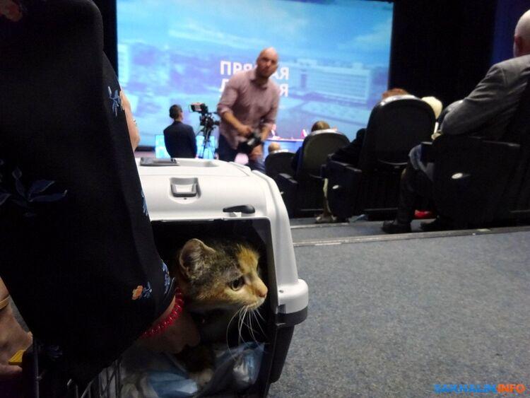 Сахалин: На прямой линии Валерию Лимаренко подарили кошку и подумали, не подарить ли ребенка