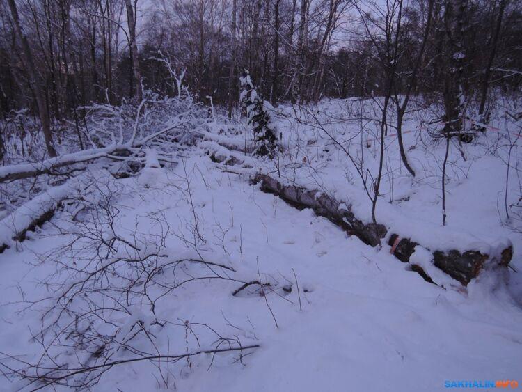 Деревья, спиленные награнице памятника природы