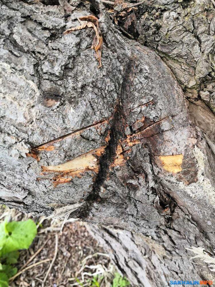 Повреждённая часть водовода и отметины перерубленного троса, удерживающего водовод