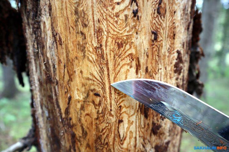 Кончик ножа указывает на брачную камеру