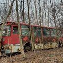 Сахалинец нашел в лесу кладбище советских автобусов